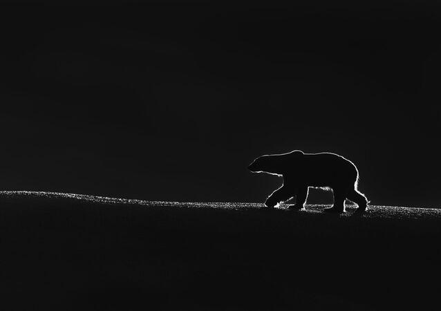 صورة بعنوان ملك القطب الشمالي، للمصور الكويتي طلال الرباح، الفائز بالمركز الأول في فئة عام - أبيض وأسود، من مسابقة جائزة حمدان بن محمد الدولية للتصوير بدورتها التاسعة بموسم الماء