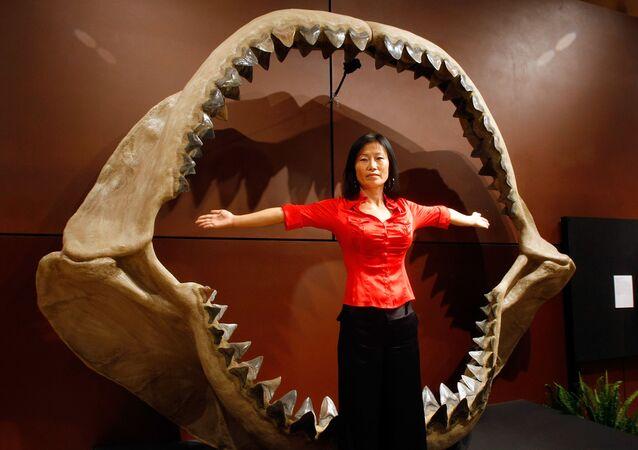 امراة تقف أمام فك لسمكة الميغالودون الأثرية الضخمة