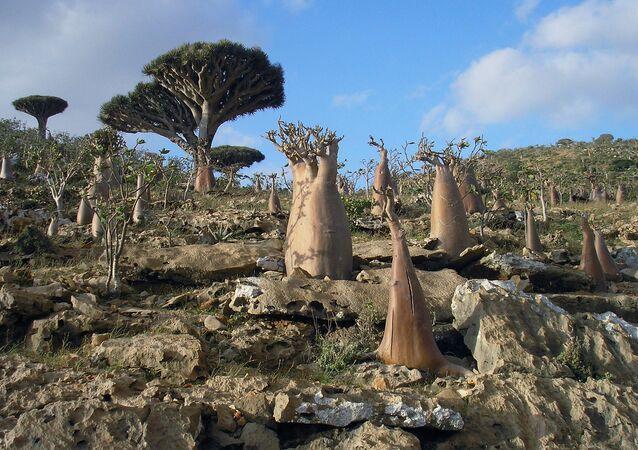 جزيرة سقطرى، اليمن 2008