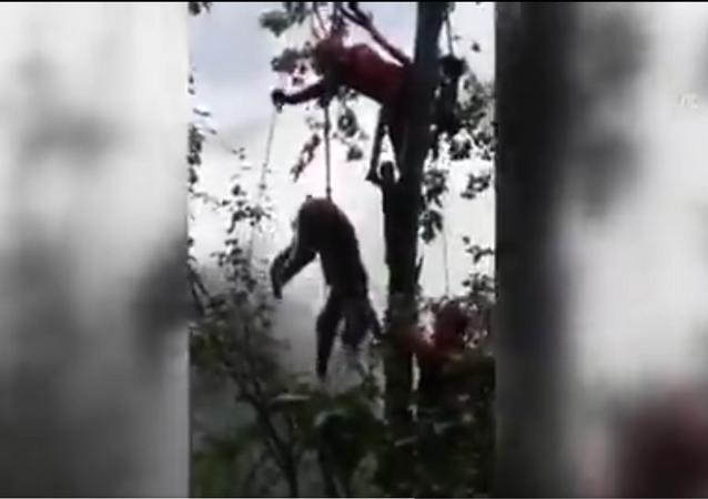 فريق تركي ينقذ صغير دب عالق على الشجرة
