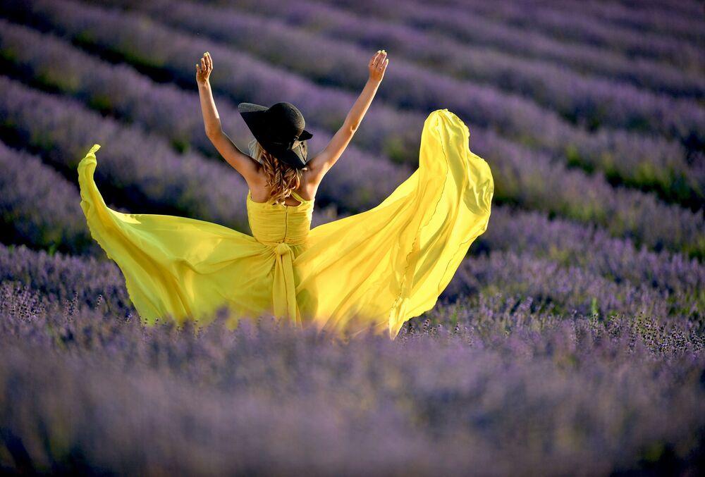 فتاة في حقل زهور اللافندر. تشغل مزارع اللافندر أكثر من 120 هكتارًا في منطقة باختشيساراي بالقرب من قرية تورغينيفكا، شبه جزيرة القم الروسية 1 يوليو 2020