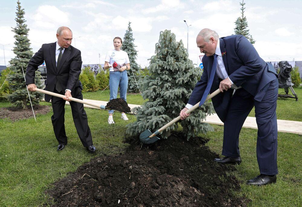 30 يونيو 2020، الرئيس الروسي فلاديمير بوتين ونظيره البيلاروسي ألكسندر لوكاشينكو، يزرعان شجرة التنوب في حفل افتتاح لنصب تذكاري للجندي السوفيتي في مدينة رجيف الروسية.