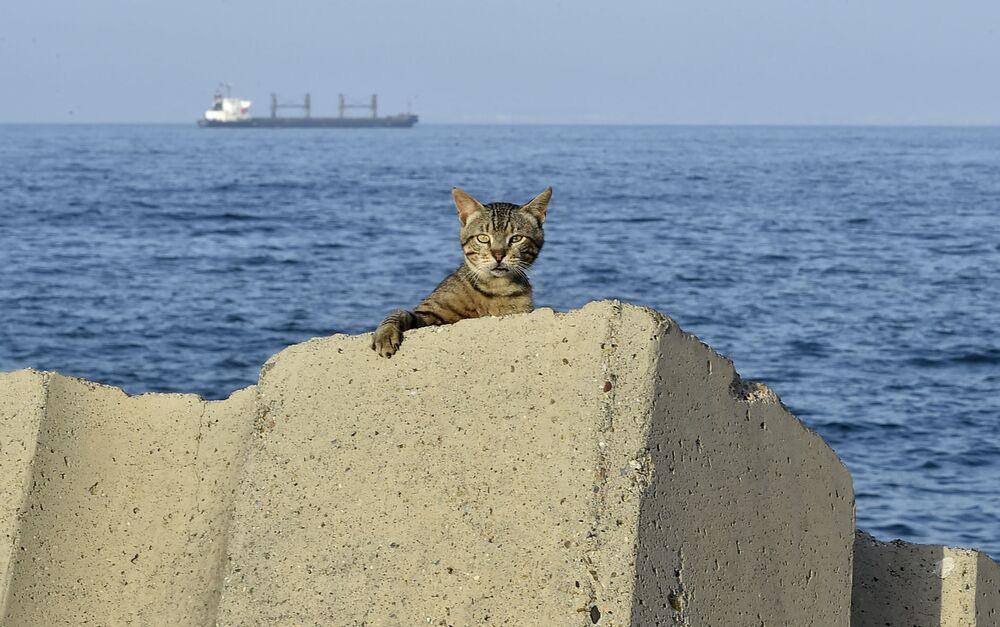قطة على الكورنيش خلال فترة حظر التجول المفروض بسبب كورونا في العاصمة الجزائرية، 29 يونيو 2020