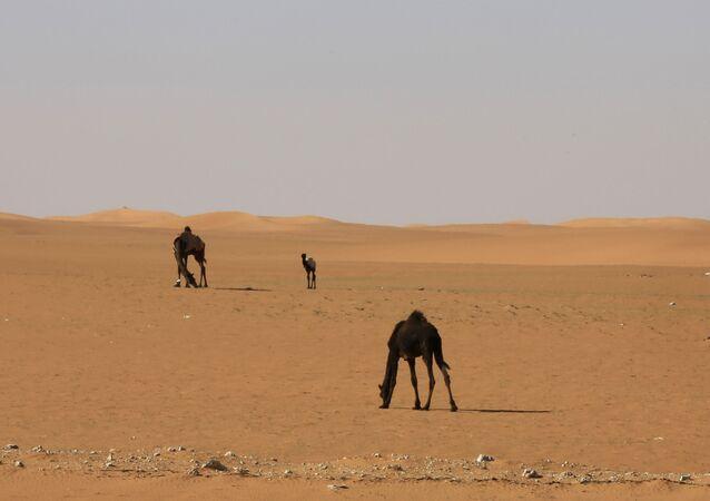 صحراء السعودية